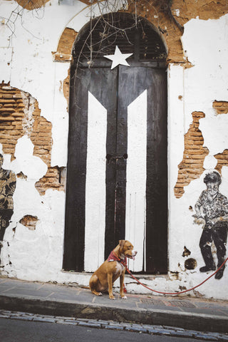 Puerto Rico Black Flag