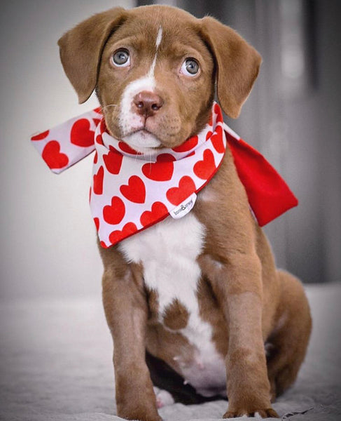Lovable Dog Bandanas - LASSO