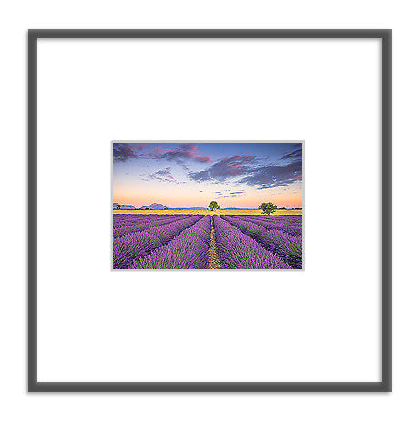 Framed photo: Lavender Fields