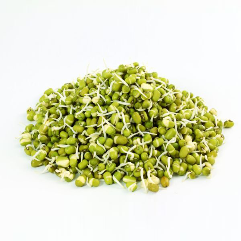MOONG SPROUT