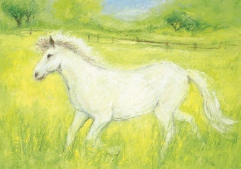 Little White Horse Postcard