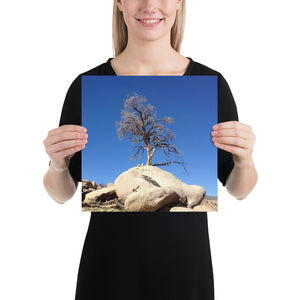 Joshua Tree - Photo Paper Print