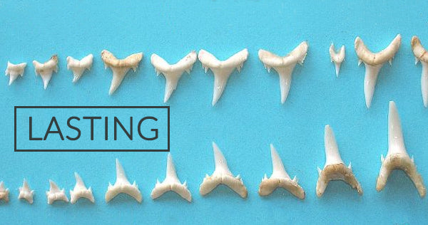 Shark Tooth Jewelry Lasting