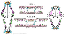 Load image into Gallery viewer, Feline & Canine Full Color Dental Chart