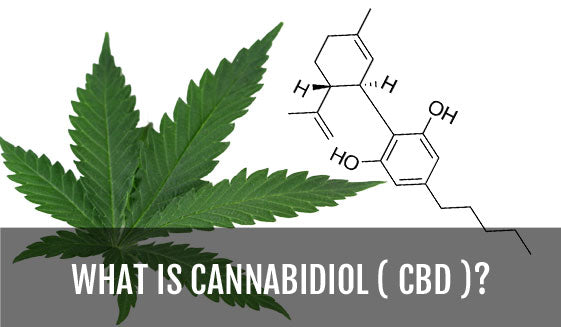 What is Cannabidiol CBD?