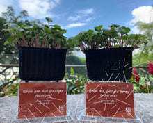 Load image into Gallery viewer, Edible Forest Grow Kit - Mizuna [Microgreen]