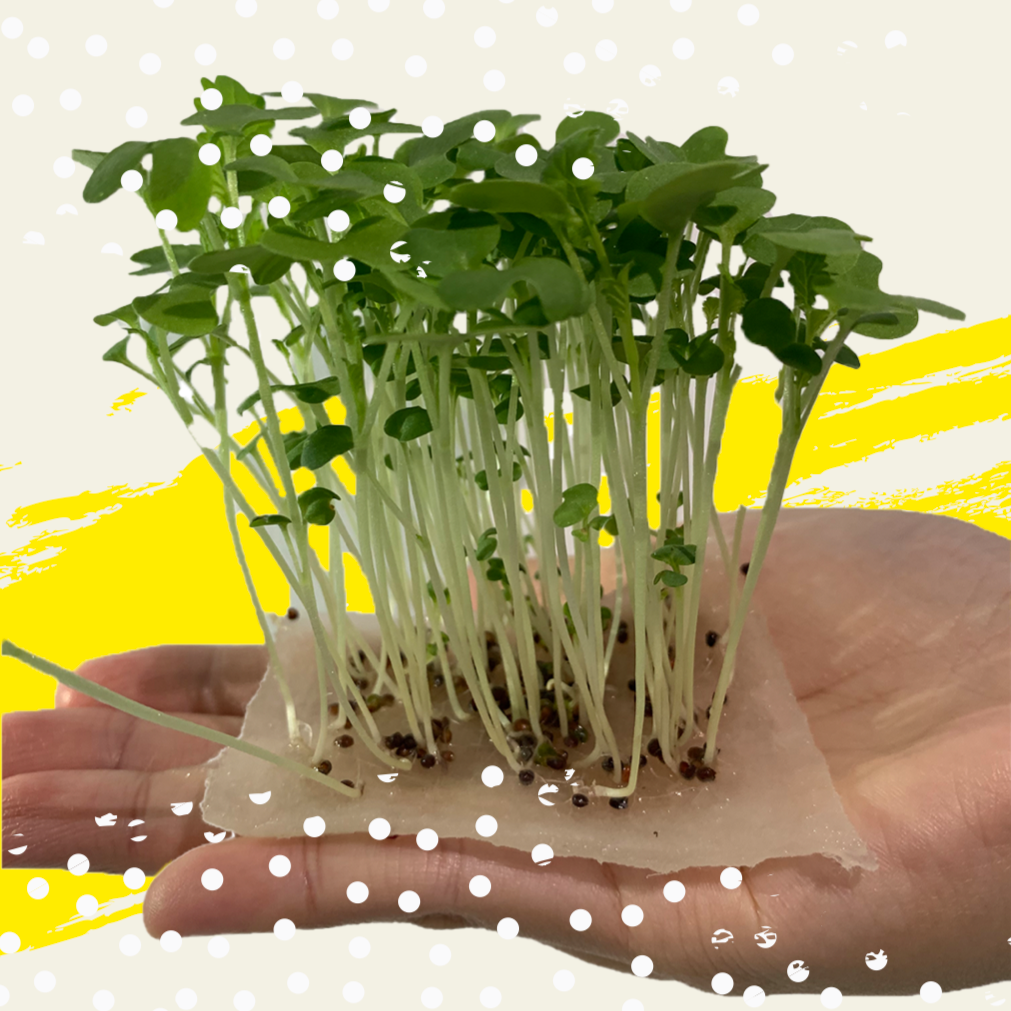 Edible Forest Grow Kit - Wasabi Mustard [Microgreen]