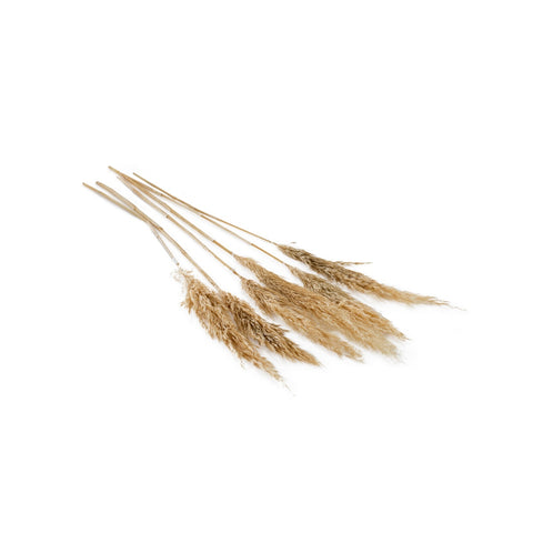 Pampas Grass Stems