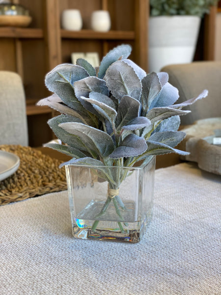 "6.5"" LAMBS EAR IN GLASS VASE"