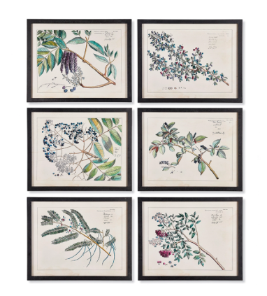 BERRY BRANCH BOTANICAL STUDY WALL PRINT SET