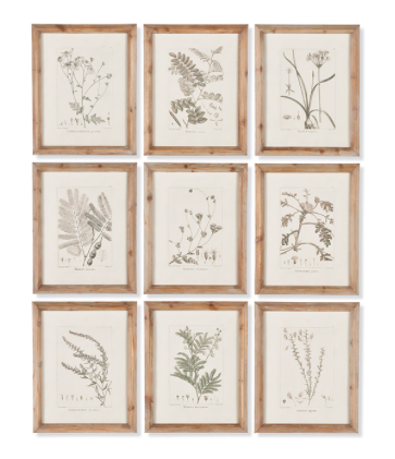 BOTANICAL ILLUSTRATION SET