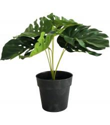 Monstera Plant 7 leaf 25cm - robcousens Outdoor Furniture Factory direct