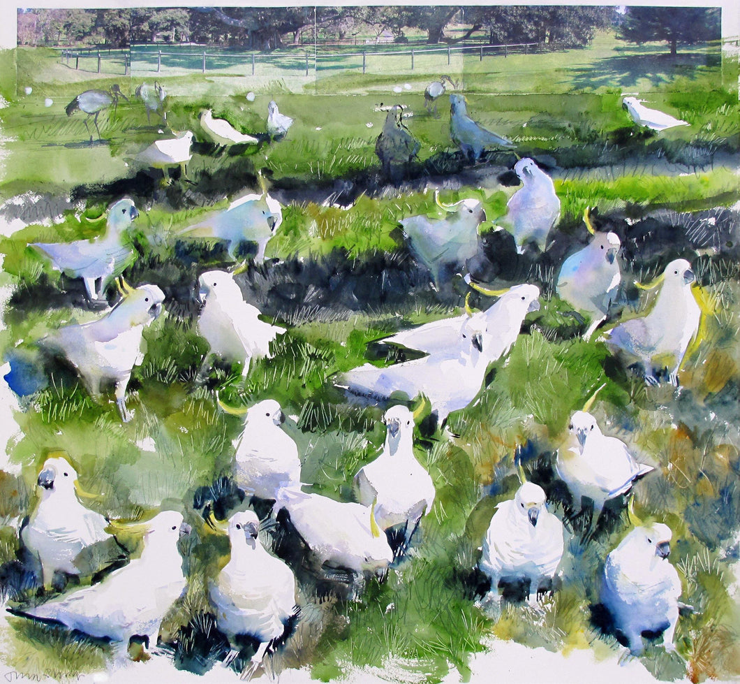 Sulphur Crested Cockatoos For Sale - John Short Irish Visual Artist