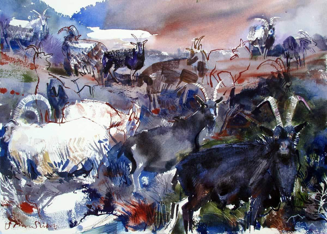 Feral Goats For Sale - John Short Irish Visual Artist