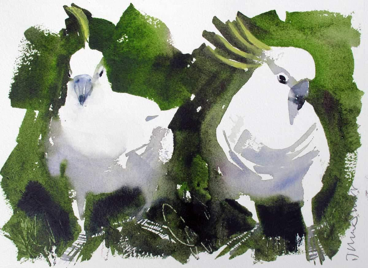 Sulphur Crested Cockatoos (study) - John Short Irish Visual Artist