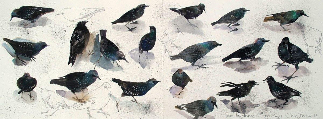 Starlings For Sale - John Short Irish Visual Artist