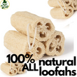 Organic Loofah Scrubs - 2pack - Reusable