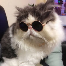 Load image into Gallery viewer, Fly Super Hot Cat Sunglasses