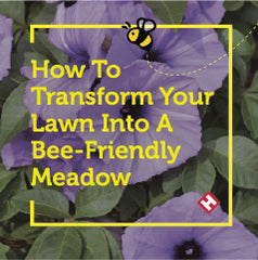 How To Transform Your Lawn Into A Bee Friendly Meadow
