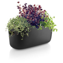 Load image into Gallery viewer, Self-watering Herb Organizer