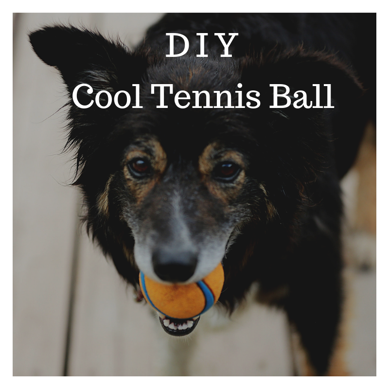 Create a Cool Tennis Ball Dog Toy