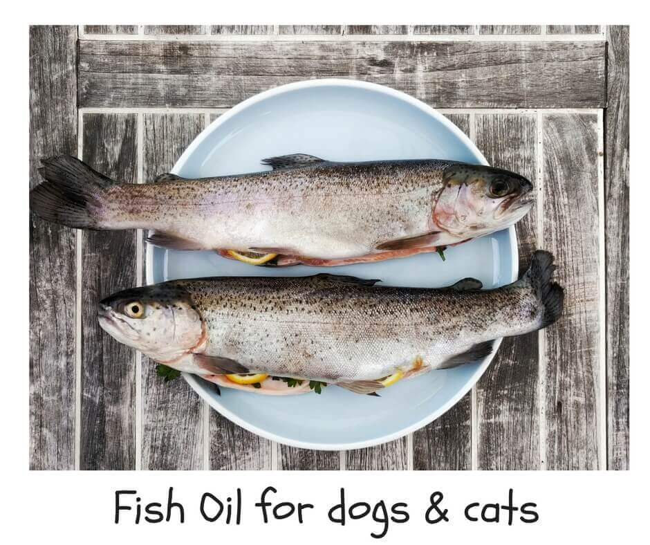 Fish Oil fоr Dogs & Cats