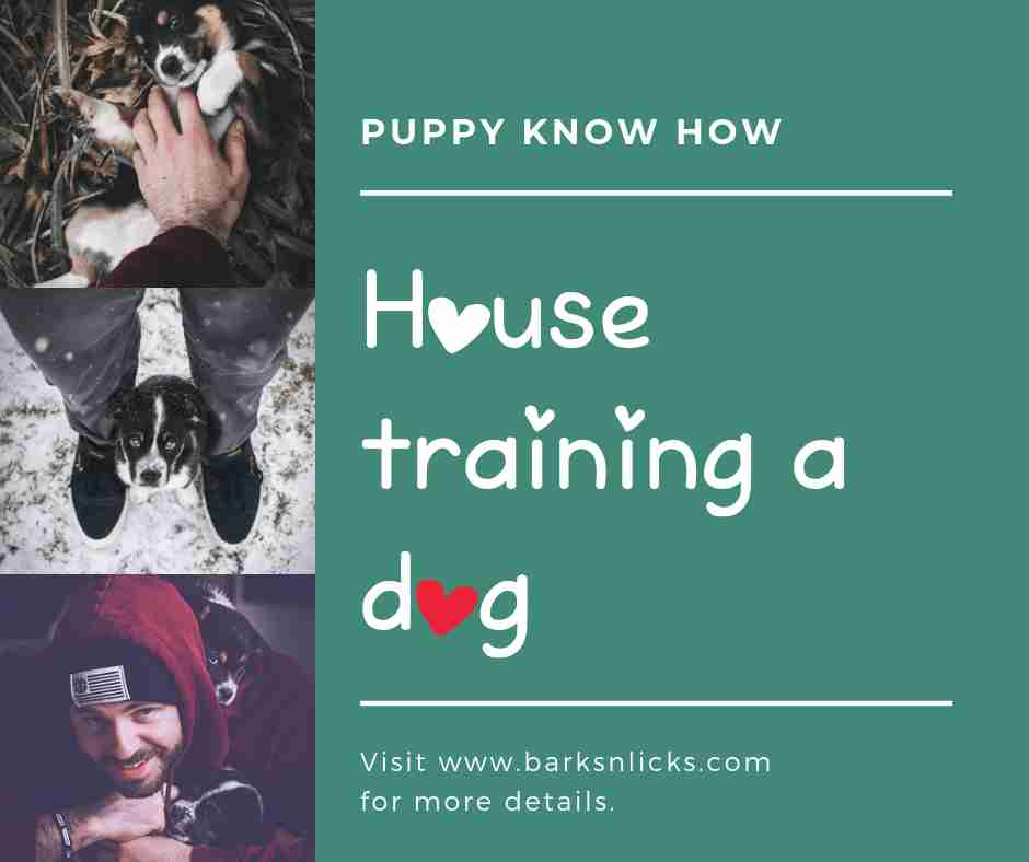 House Training your dog