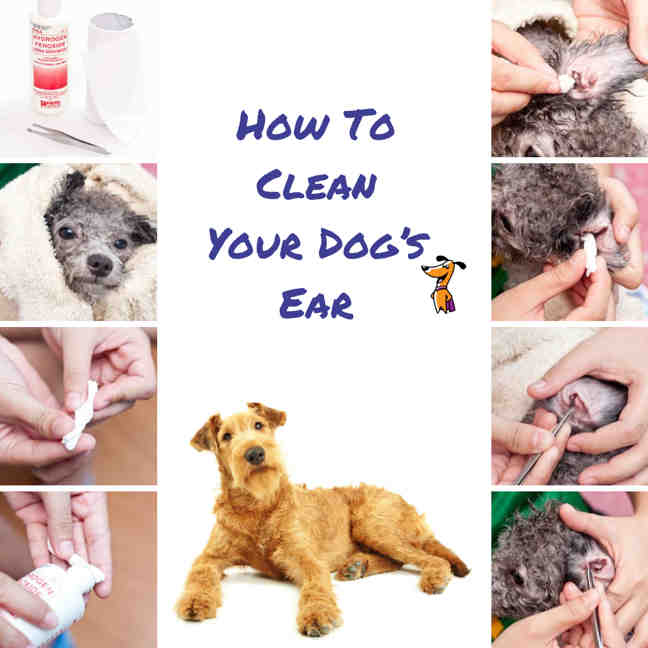 How To Clean Your Dog's Ear
