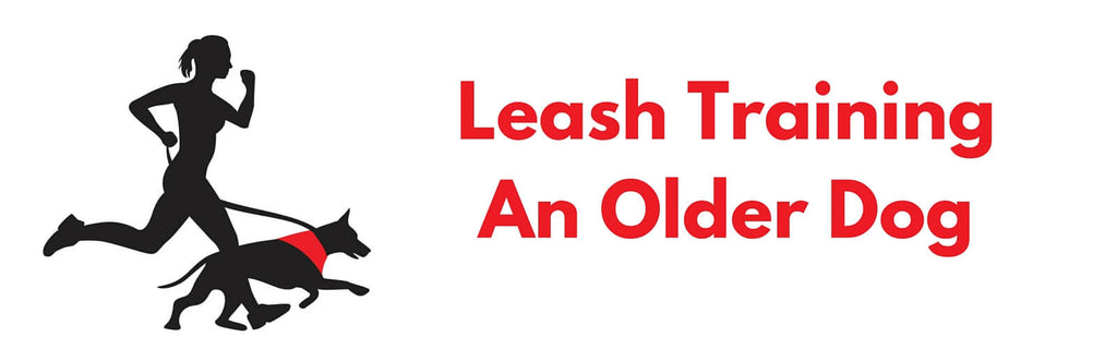Leash Training аn Older Dog