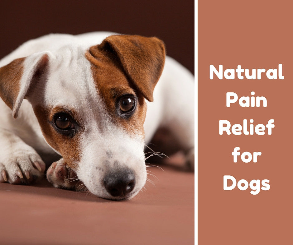 Natural Pain Relief fоr Dogs