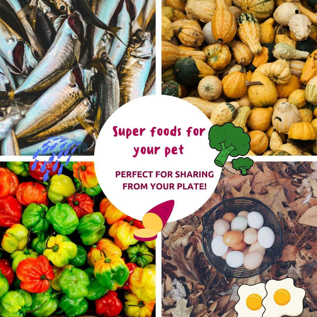 Superfoods perfect for sharing with your pet from your plate!