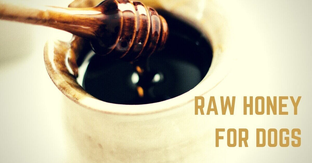 Raw Honey for Dogs