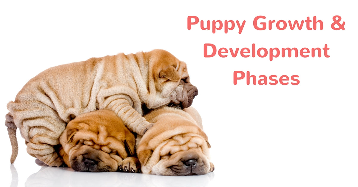 Puppy Growth Nd Development Phases Barks N Licks