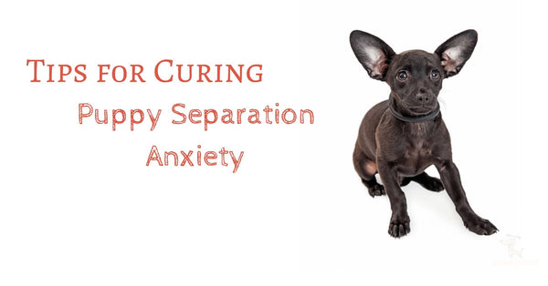 Tips fоr Curing Puppy Separation Anxiety