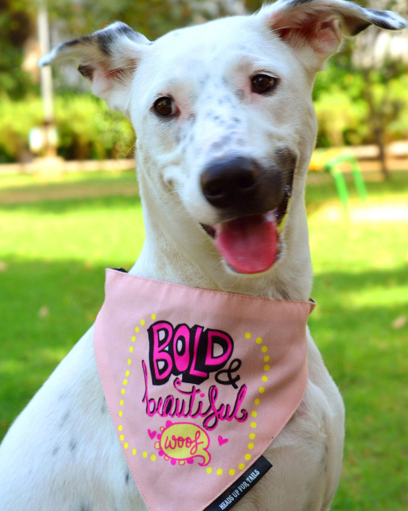 Bold & Beautiful Bandana - Barks and Licks