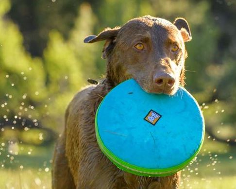 Ruffwear Hover Craft™ - Barks and Licks