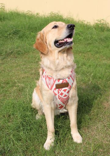 PoochMate Navajo Canvas Harness - Barks and Licks