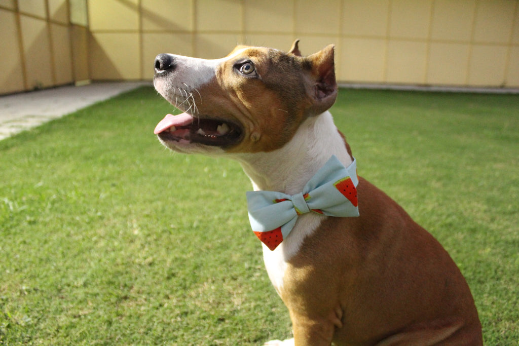 PoochMate Watermelon Bow Tie - Barks and Licks