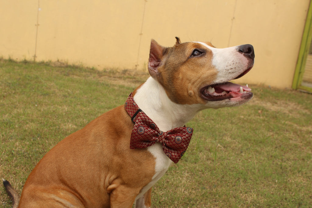 PoochMate Wedding Bow Tie - Barks and Licks