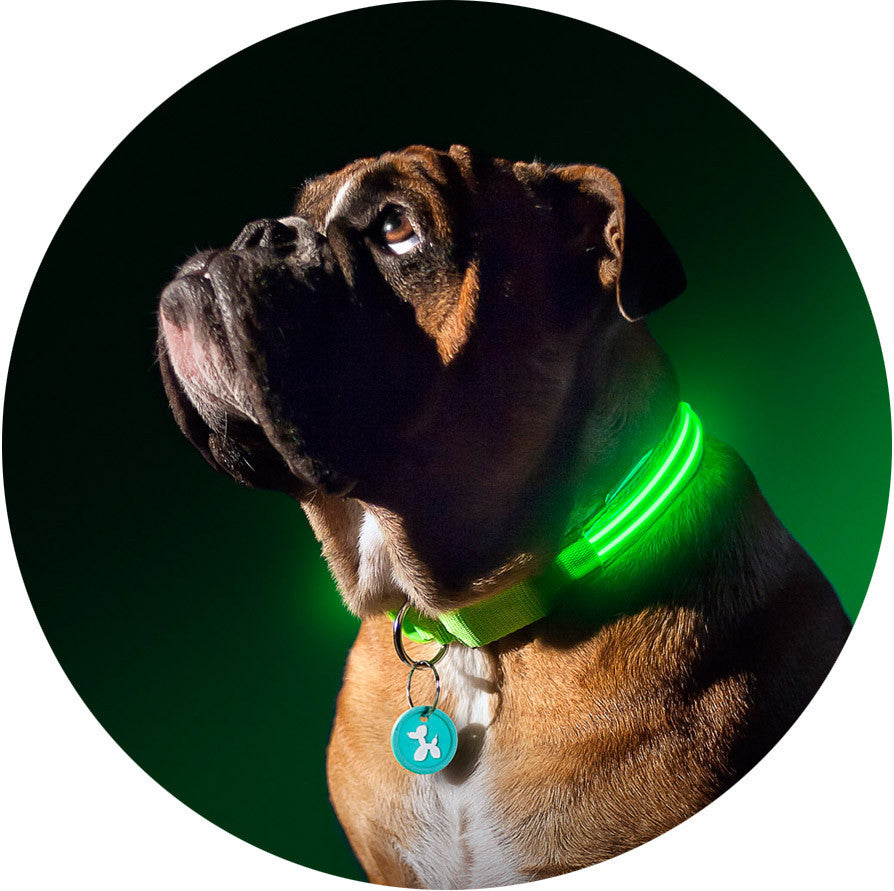 Green Gremlin Poochlight™ Light Up Flashing Dog Collar - Barks and Licks