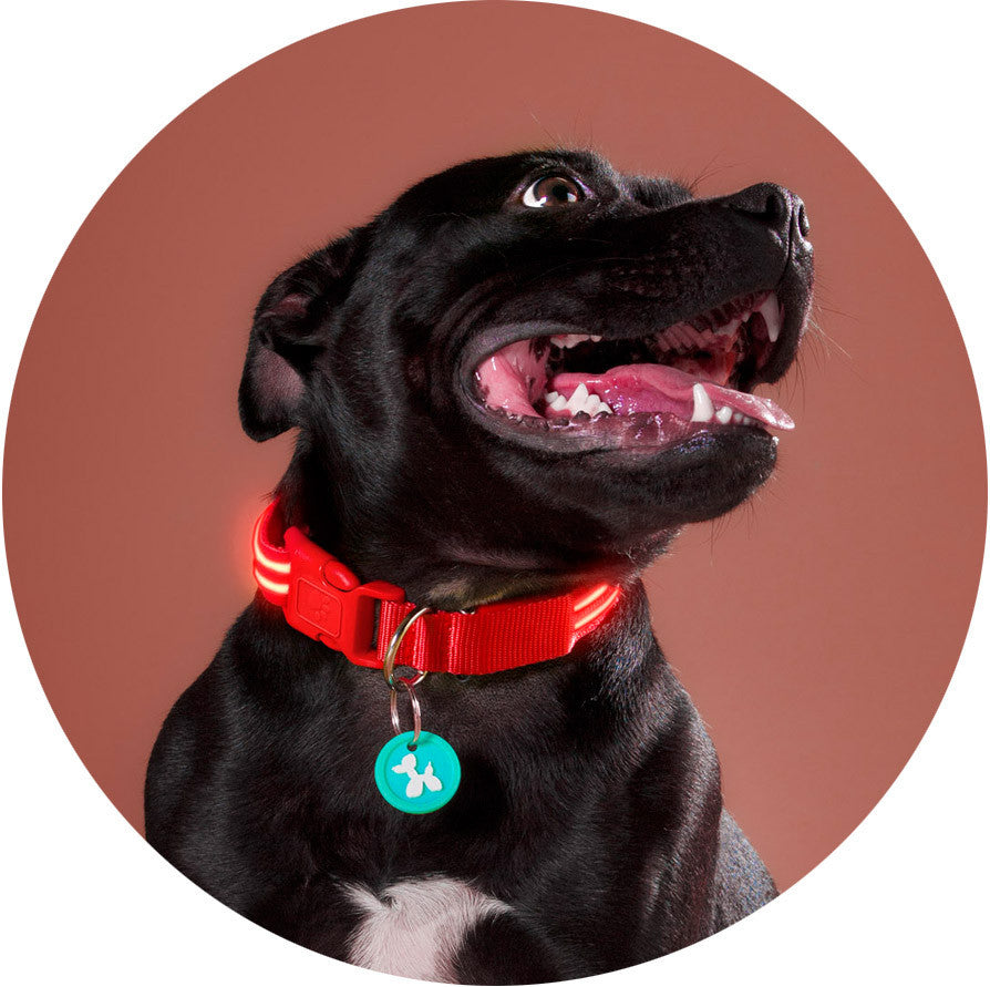 Lava Red Poochlight™ Light Up Flashing Dog Collar - Barks and Licks