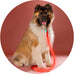 Lava Red Poochlight™ Light Up Flashing Dog Leash - barksnlicks  - 2