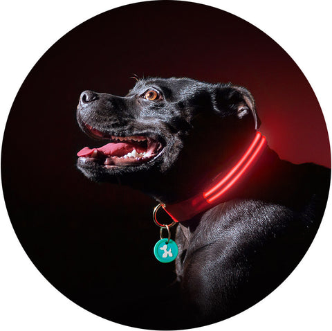 Lava Red Poochlight™ Light Up Flashing Dog Collar - barksnlicks  - 1