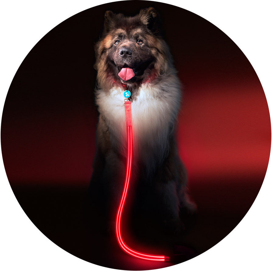 Lava Red Poochlight™ Light Up Flashing Dog Leash - Barks and Licks