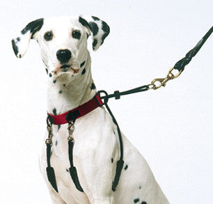 The Sporn Training Halter - barksnlicks  - 1