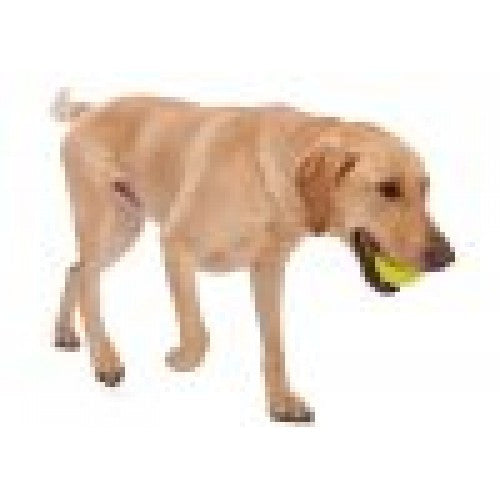 Zogoflex Jive Ball - barksnlicks  - 2