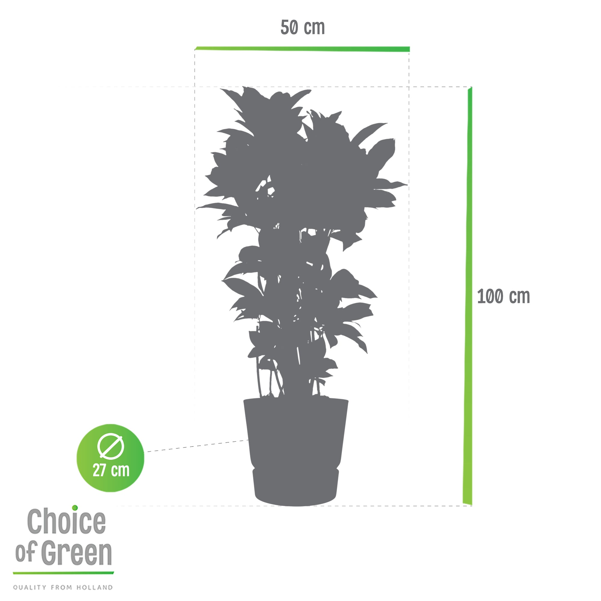 Choice of Green - Codiaeum variegatum Croton in Elho® Greenville pot zwart - Hoogte 100 cm - Diameter pot 30 cm