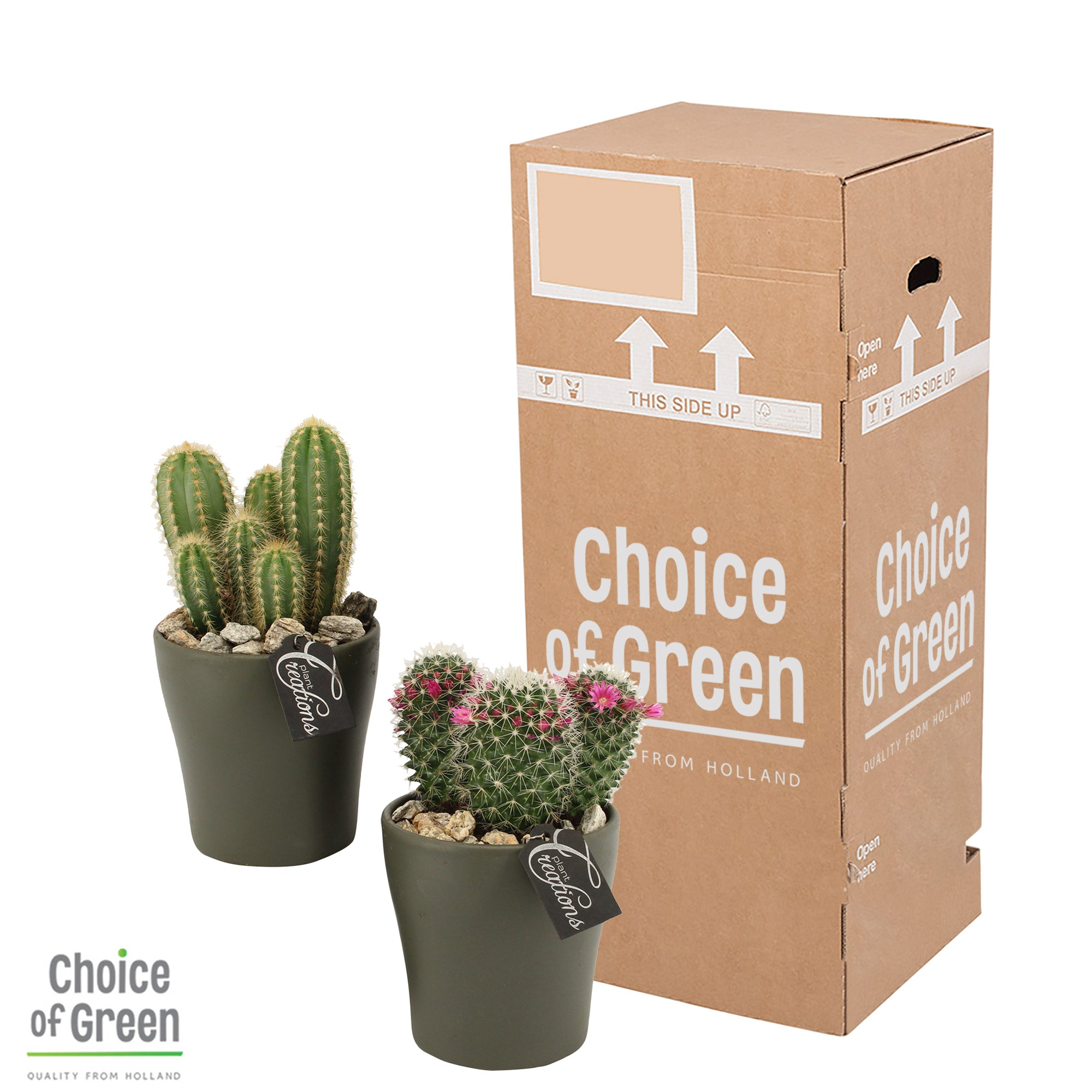 Choice of Green - Cactus in mix-keramiek - Hoogte 25 cm - Diameter pot 12 cm