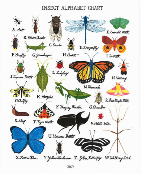 Lily Kao Design Alphabet print - Insects