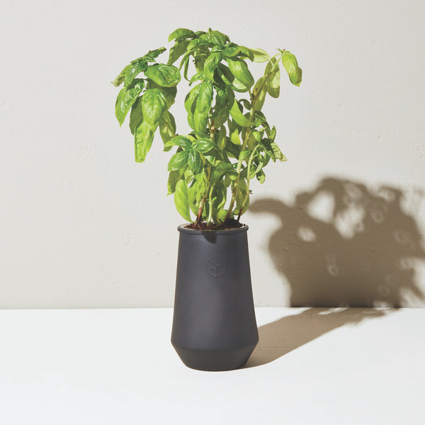 Modern Sprout Tapered Tumbler Grow Kit - Basil